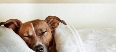 Zašto psu treba da dozvolite da spava sa vama?