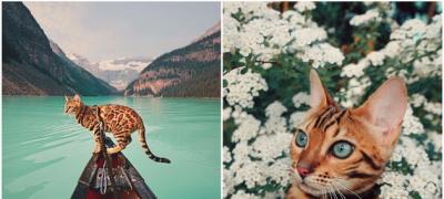 Avanture jedne mačke koja putuje više od vas