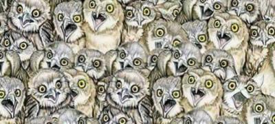 Da li možete da pronađete mačku među sovama?