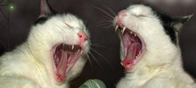 """""""Vreme je da probudim ove sluge da me nahrane"""" - 24 sata iz dnevnika jednog mačora"""
