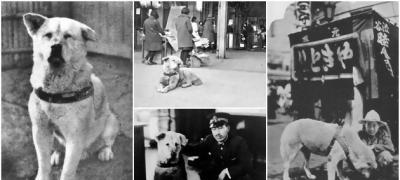 Retke fotografije Hačika, najvernijeg psa na svetu