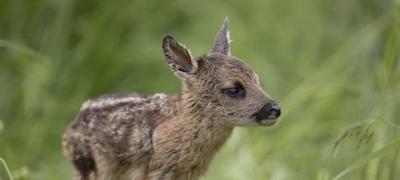 Bebe životinje koje svojom slatkoćom svima mogu da razvedre dan