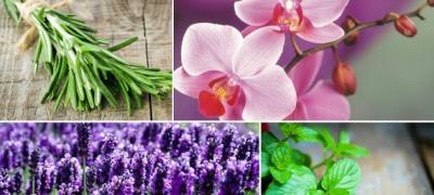 Feng Šui: 7 biljaka koje privlače pozitivnu energiju